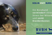 Bürohund - Infocards