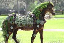 Topiary / by Dragon Tiger Phoenix