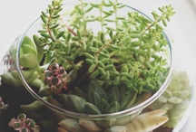 Succulents and plants  / by Falon Kerby