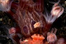 ~ sea creatures ~
