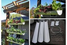Apartment Vegetable Gardens