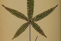 Botánica