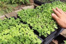 PLANTS / microgreens