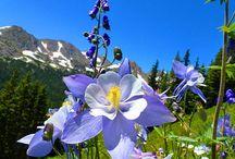 Wildflowers around Colorado