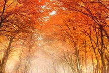 forest in orange