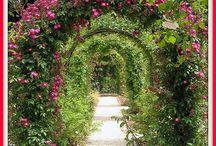 Rose Arbors