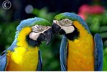 Animals so cute / by Tami Wielandt Crane