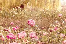 flowers / by Diane Gow-Miklos