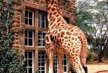 I'll grab my cane and my giraffe