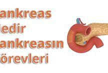 Pankreas Nedir, Pankreasın Görevleri