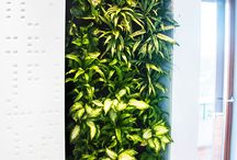 Ogrody wertykalne - Realizacje MOSS decor / Żywe zielone ściany z roślin, posiadające system nawadniający.