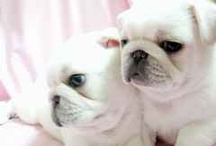 Puppies I want to adopt
