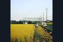収穫。 harvest #harvest #rice #idyll #田んぼ #稲刈り写真