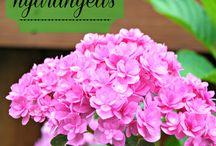 Favorite flowers/plants / by Dana Bell