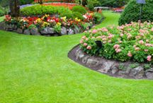 Garden / by Brittany Conrad