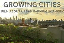 Urban Farming / Urban farming is growing in cities around the country. Learn more here! / by Sustainable America