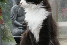 CATS -  KOTY
