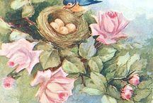 aves / by Maria Cecilia Vargas