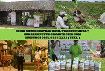 HUB 0851 0333 2222 ( TSEL ) Distributor Pupuk Organik Cair / Distributor Pupuk Organik Cair GDM,Distributor Pupuk Organik Cair Nasa GDM,Distributor Pupuk Organik Cair di Surabaya,  Apakah GDM GDM merupakan Pupuk Bio Organik Cair yang di hasilkan dari bahan-bahan organik dan bakteri yang diperlukan oleh tanaman.  BERMINAT DENGAN PELUANG DARI KAMI HUBUNGI :  0851 0333 2222 ( TSEL ) http://peluangusahaagro.com/
