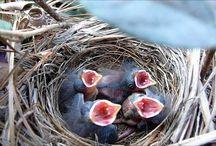 Bird videos