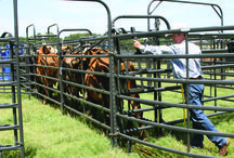 Sweep Systems  / Priefert offers a variety of sweep systems customized to fit your herd.  / by Priefert MFG