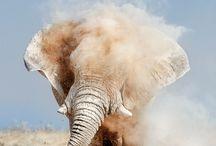 Animals / by Vinnie Edirisinghe