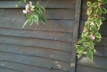 Fence colour