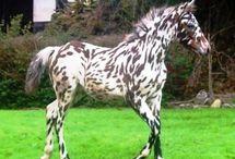 Horses Beautiful