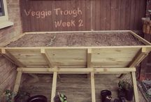 """""""The Troff"""" Progress - Our Vegetable Trough & Garden / Photo's of my garden throughout the summer and update images as we try to cover the cost of building a vegetable trough with what is produced inside it"""