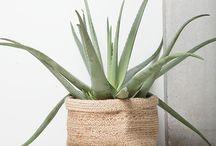Planten en accessoires