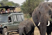 African Spice Safaris / Each of our safaris allows you to fully immerse yourself in the stunning landscapes, legendary wildlife, and rich cultures of Africa.