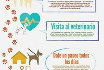 datos perros