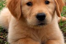 Puppies-)