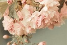 Flower Floral
