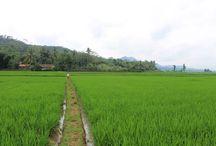 Nature / Landscape views