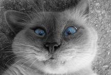 chat trop drole