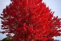 Top Picks From Homeowner's On Their Favorite Trees