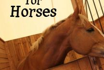 Horse: Nutrition and Food