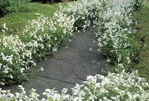 Garden / Ideas for the front & back gardens