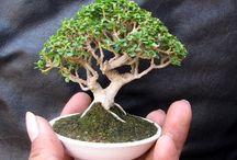 name bonsai