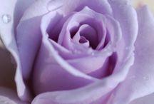 Cores: Lavanda, Roxo, Purple...