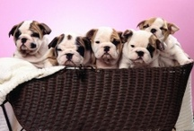 cute puppies <3