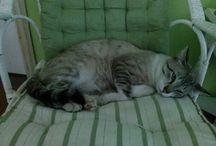 Gatos / Meus amados felinos.