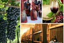 Wine Tour to Armenia / Wine Tour to Armenia with Armenia Hospitality & DMC