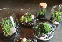 Cool horticulture ideas