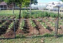 Gardening - Living off the Land / Texas  / by Stephanie King