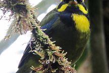 Birding / by Jennifer Sandberg