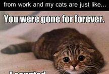 cats - I just love 'em