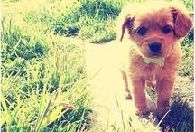 omg cute!