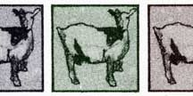 Mah-ah-ah Goats / by Dee Dickson